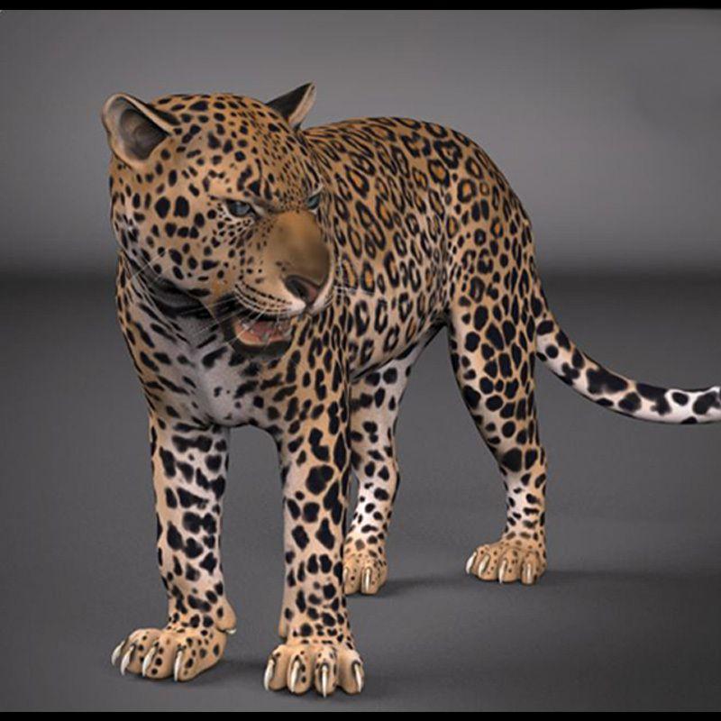 Free-Maya-Rigs-Leopard